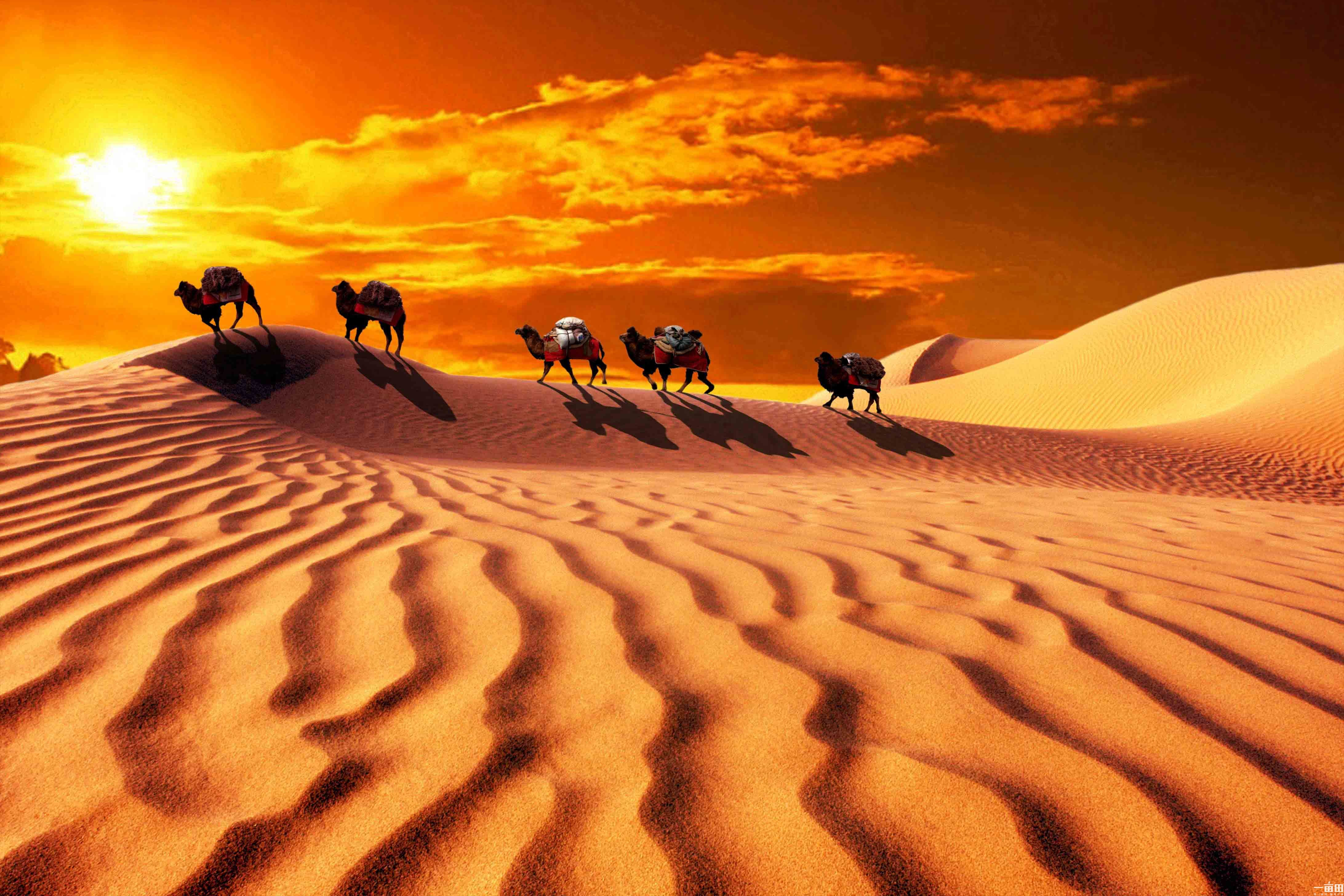China_silkroad_desert_camels