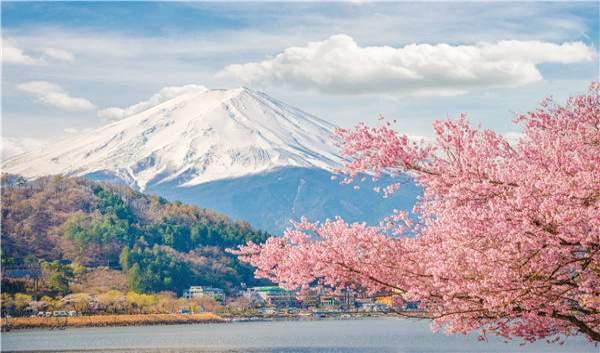 Japan_sakura2