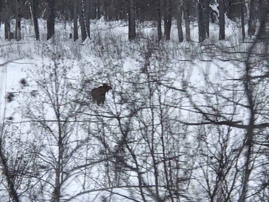 Alaska in March_13