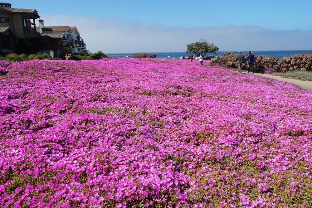 Lovers-Point-Park_flower-carpet_4