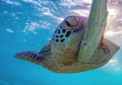 great barrier reef-australia